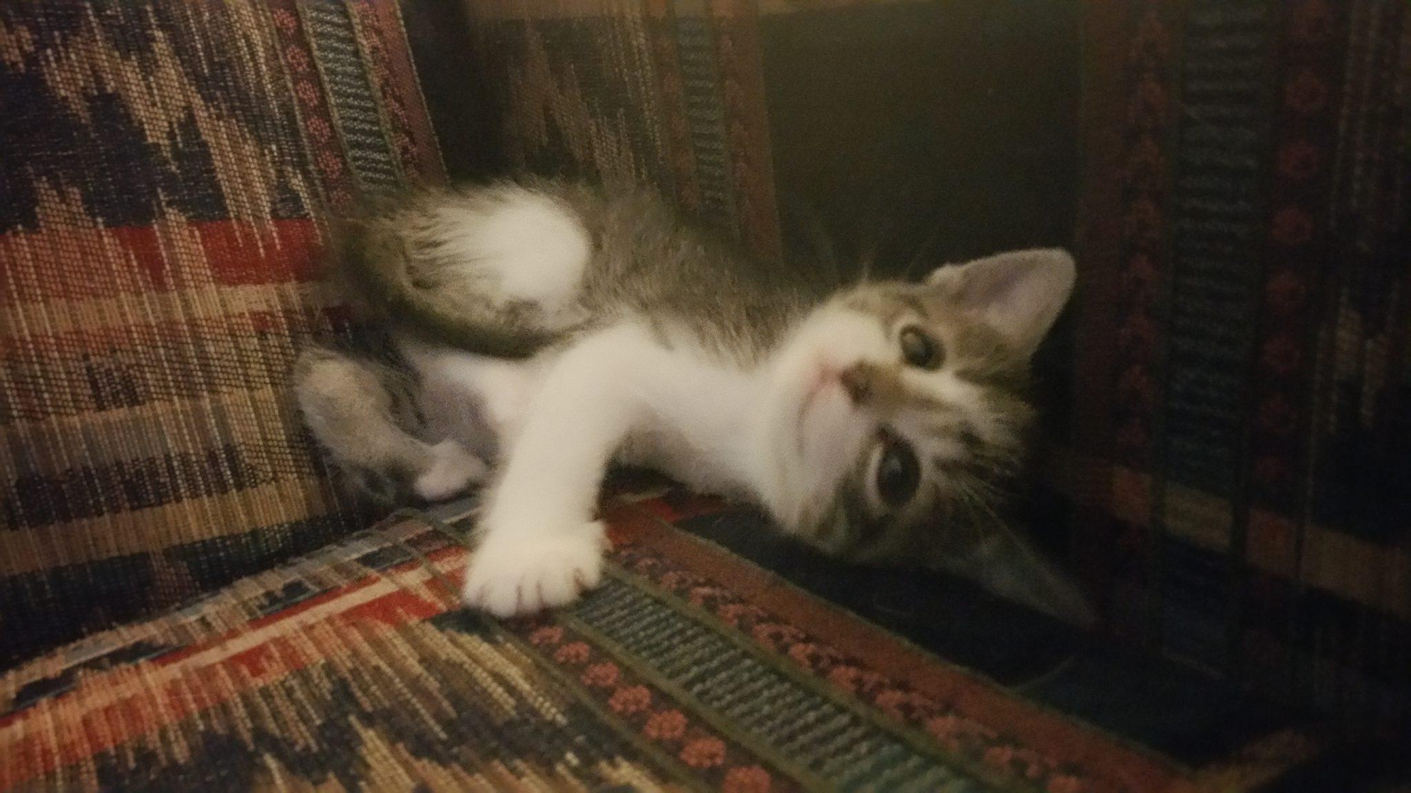 Kipper the Kitty